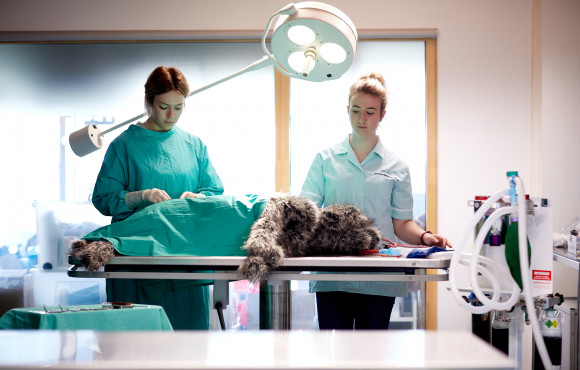 College launches new advanced veterinary diploma for 2021 image